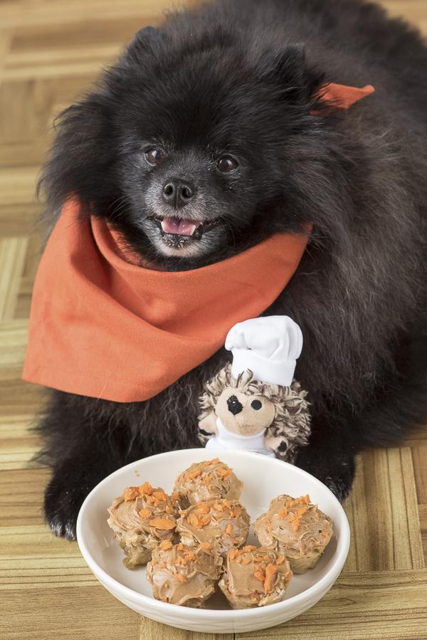 Pomeranian, stuffed hedgehog, homemade dog treats, wheat free treats for dogs