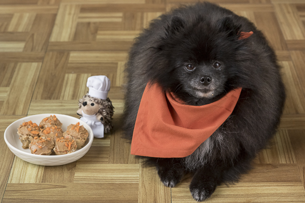 Pomeranian with homemade pupcakes, DIY dog treats