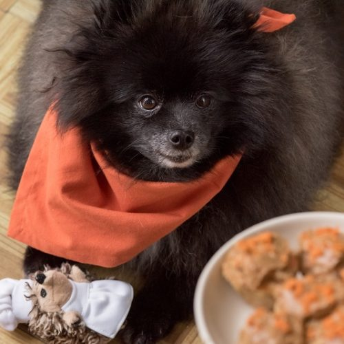 Living With Dogs:  Vegan Carrot Pupcakes