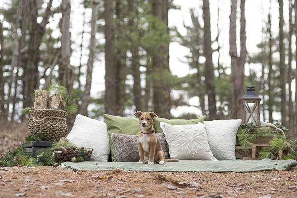 Adorable puppy photos in the woods, holiday puppy pictures