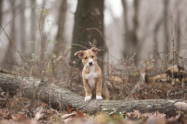 super cute puppy standing on fallen tree, on location dog photography