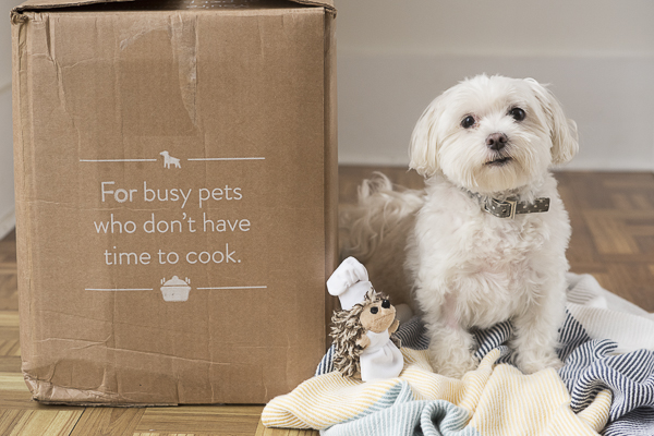 Maltese next to NomNomNow box, NomNomNow review, lifestyle dog photography