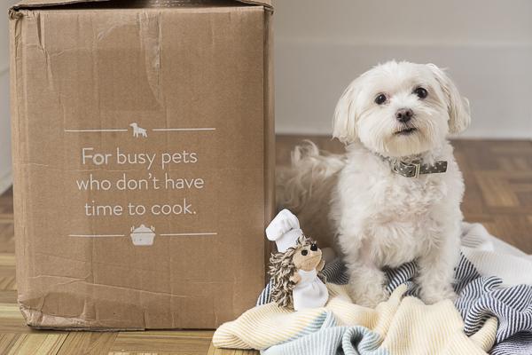 Maltese next to NomNomNow box, NomNomNow review, lifestyle dog photography