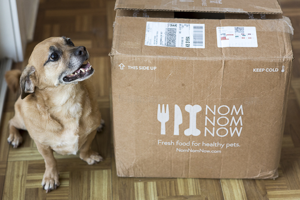 Puggle mix next to NomNomNow box,