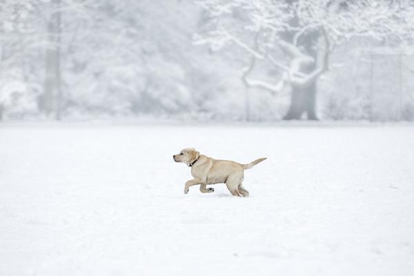 puppy running in snow, snowy day photo ideas
