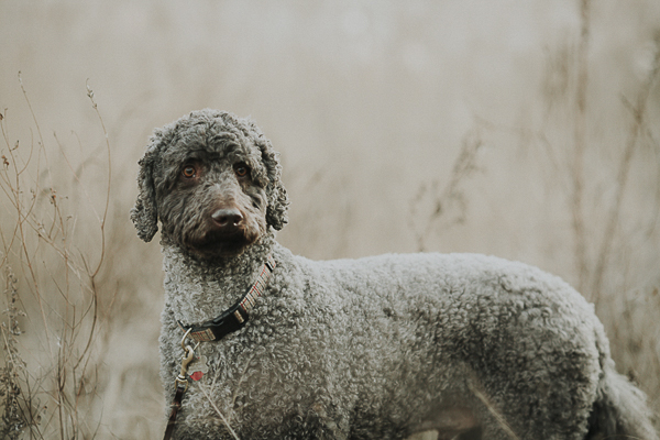 handsome dog in field, winter dog portraits