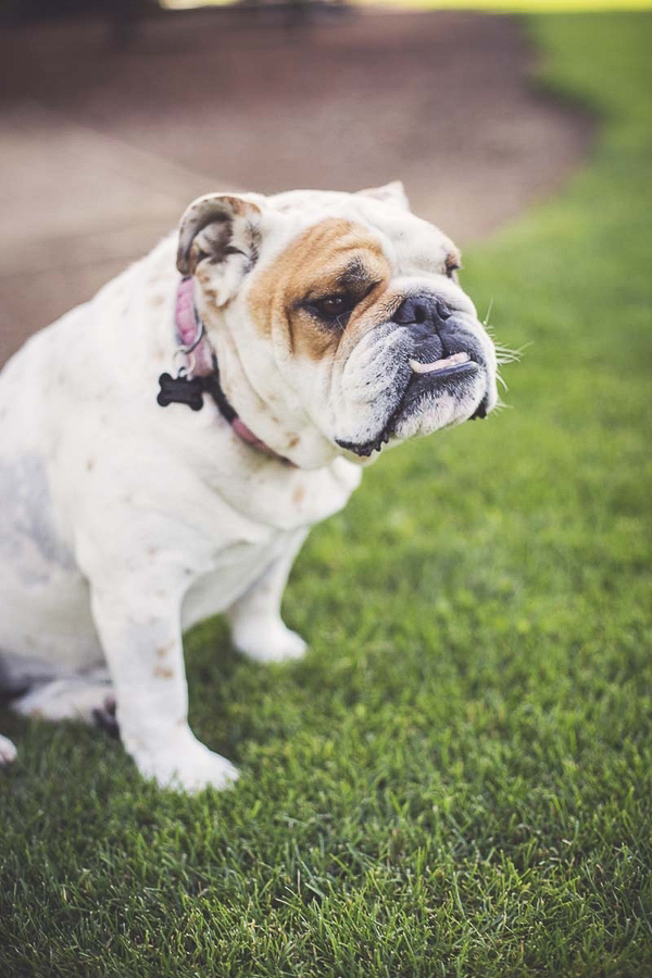 Foundation Style Dog Training