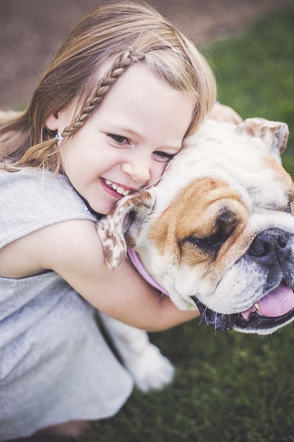 little girl hugging dog, English Bulldog