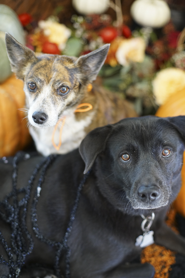 Howl-O-Ween Dogs