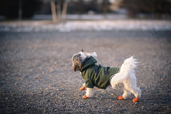 small dog running on pavement