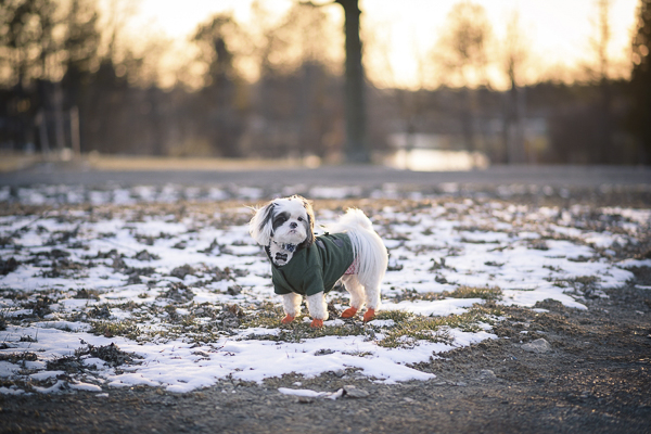 Happy Tails:  GusGus the Adorable Deaf Dog