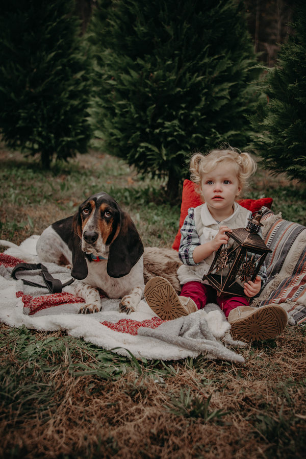 Basset Hound and little girl sitting on blanket at Christmas tree farm, holiday photo ideas