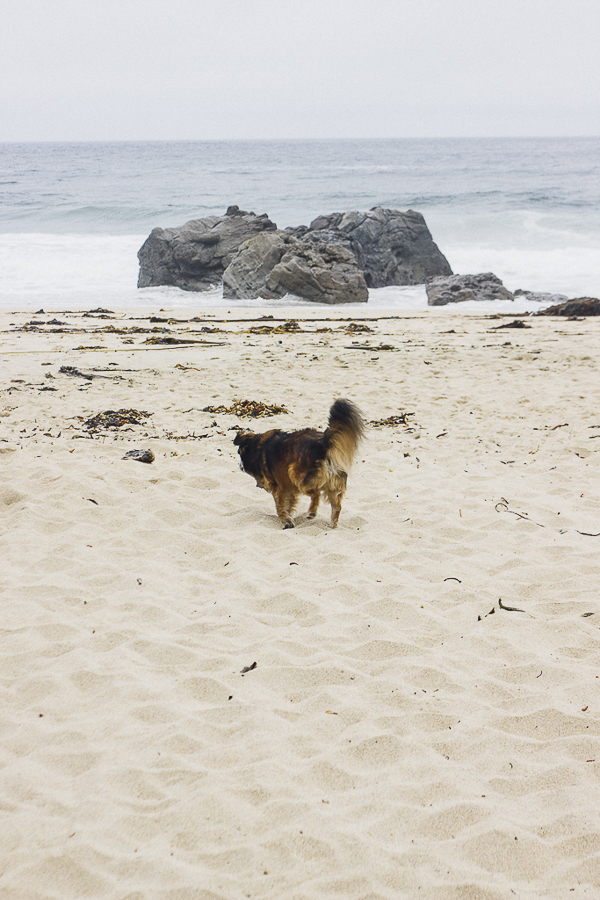 dog friendly beach, West Coast destinations for doglovers