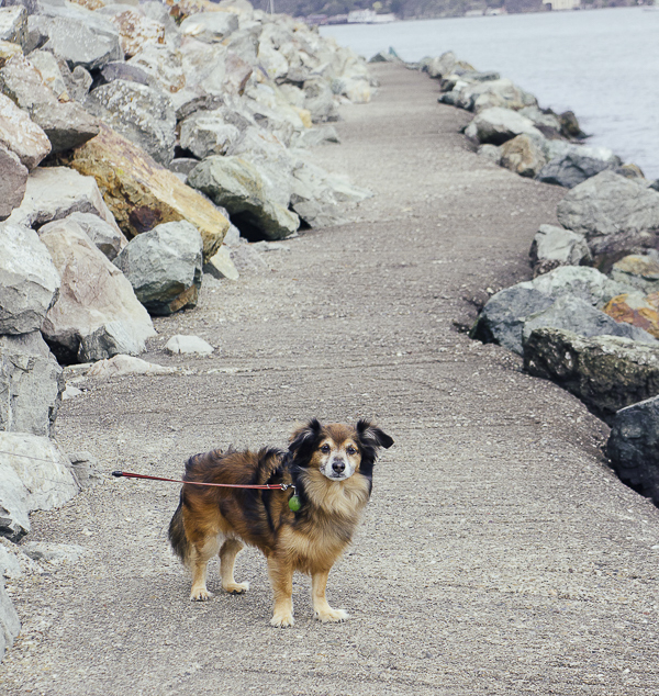 dog on trail by ocean,