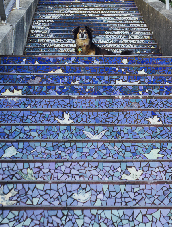 dog on stairs, mosaic steps, blue, purple steps with white birds