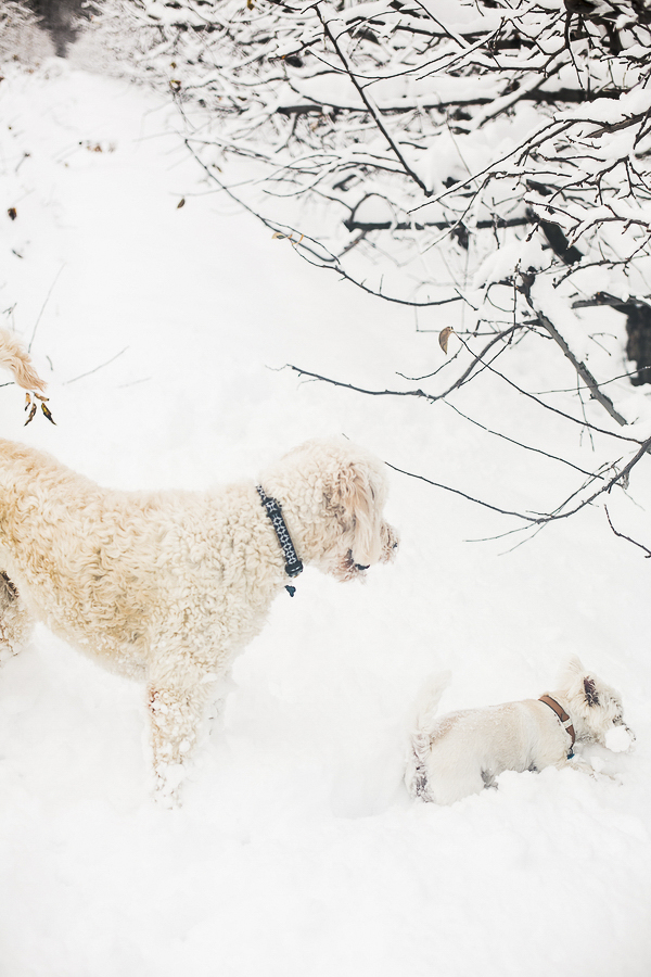 short dog problems, snow dogs, on location dog photography