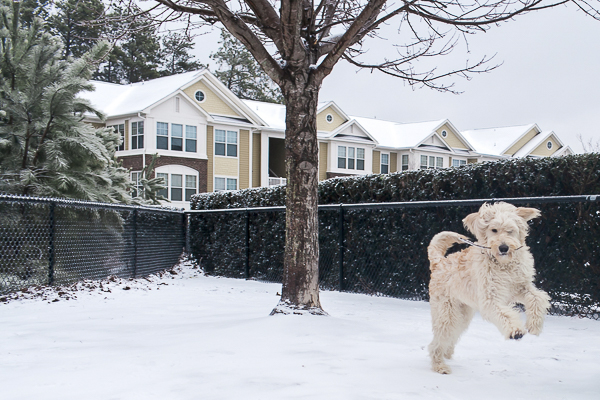 dog playing in snow, winter dog photos