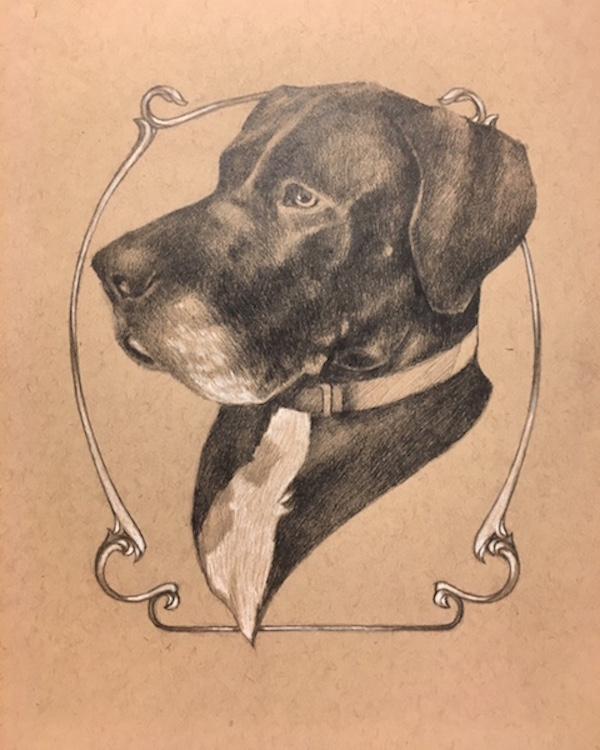 distinguished dog portrait, Great Dane, hand drawn portrait