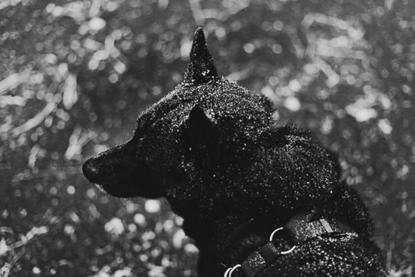 dog silhouette, snow dog