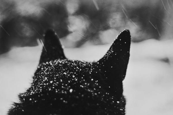 snow dog, black and white dog photography, Portland snowy day