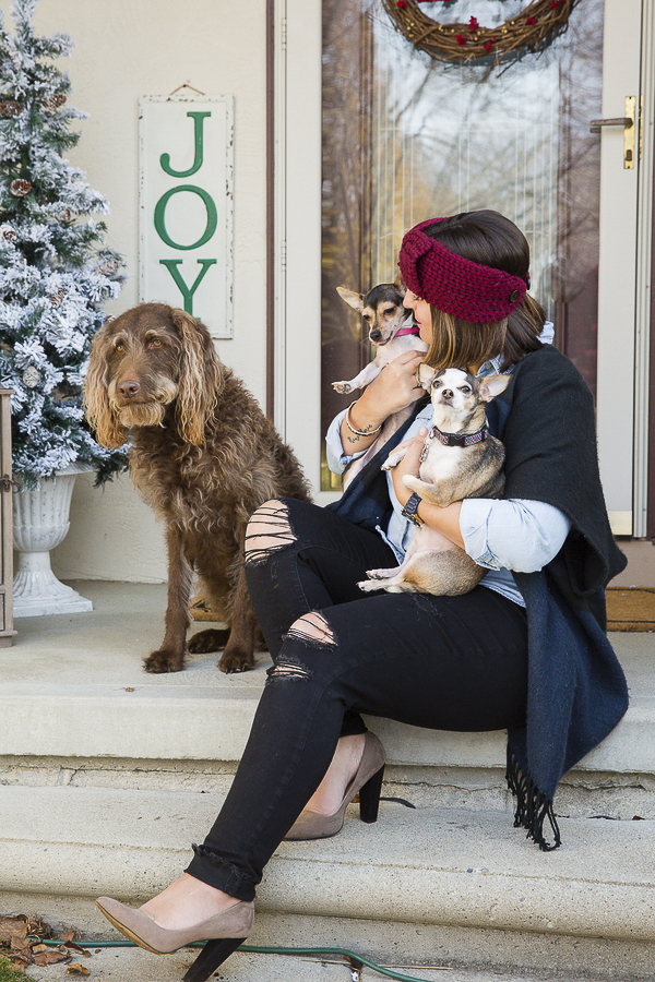 woman holding 2 Chihuahuas and sitting with Labradoodle, foster dog