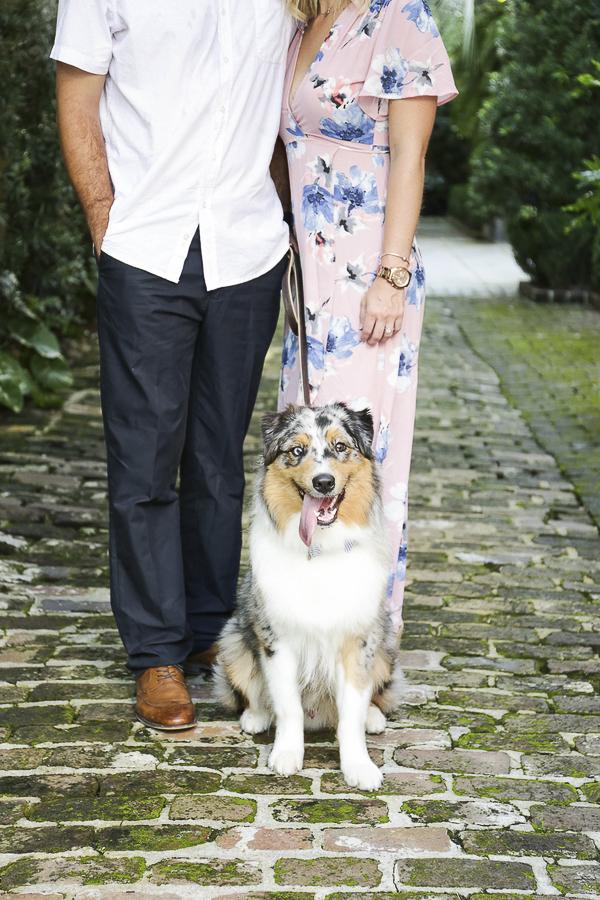 engagement photos with dog, brick sidewalk, blue merle Australian Shepherd