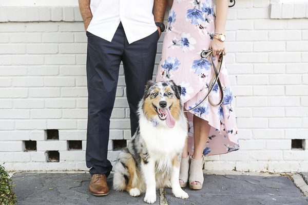 Blue Merle Australian Shepherd, engagement photos in historic Charleston