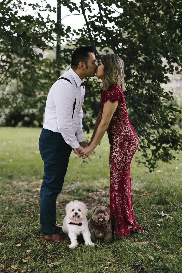 well dressed couple holding hands and kissing over small dogs, engagement photos with dogs