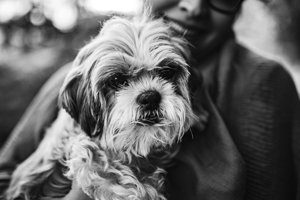 Shih Tzu, black and white dog portraits