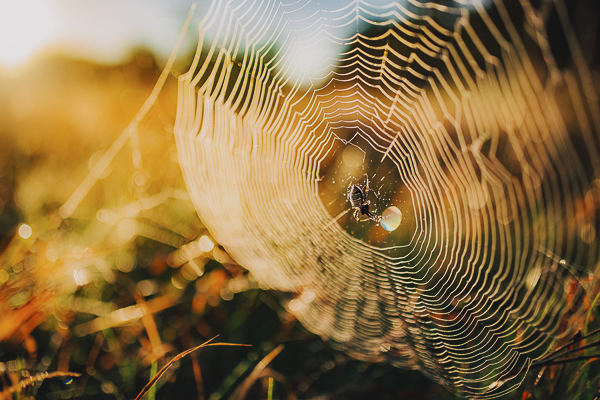 spider web at sunrise