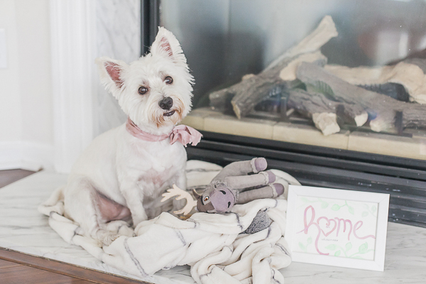 Westie sitting with toy by fireplace, lifestyle dog photography