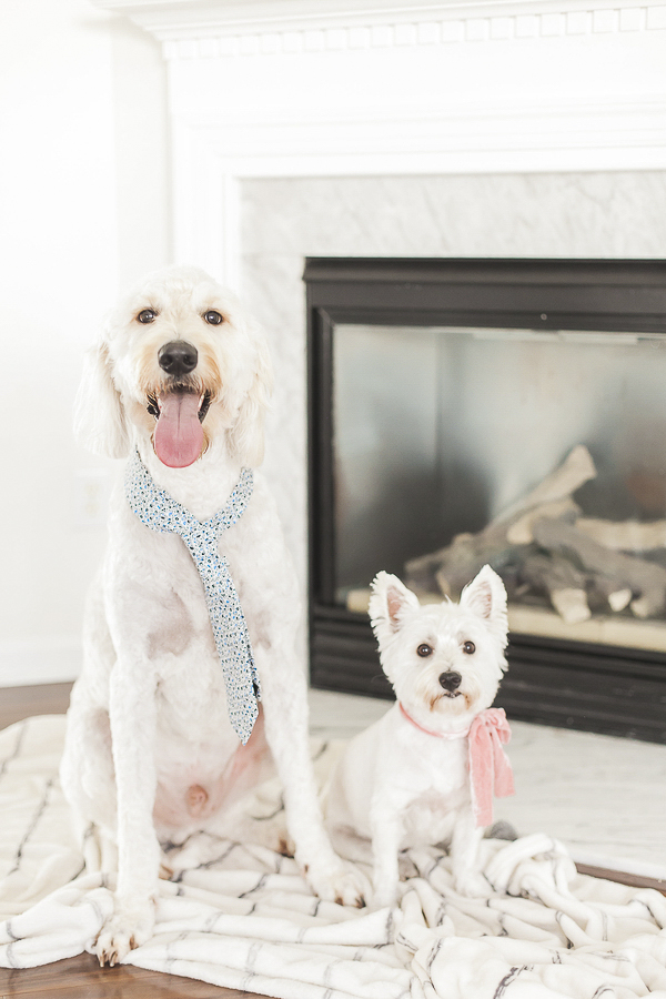 Westie and Doodle sitting by fireplace, new home,
