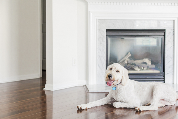 Golden Doodle lying on hardwood floor next to fireplace, lifestyle dog photography