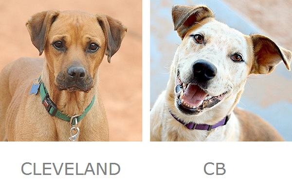Adoptable dogs Best Friends Animal Sanctuary