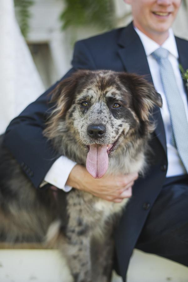 Best (Wedding) Dog:  Stella the Australian Shepherd Mix