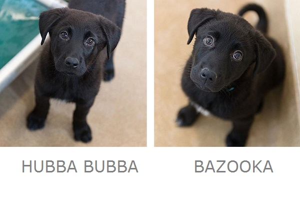 adoptable puppies from Best Friends Animal Sanctuary, simple ways to encourage pet adoption
