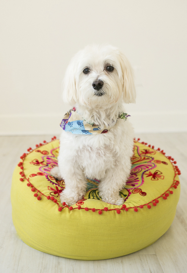 cute Maltese mix, Havanese mix sitting on yellow pillow, Nashville pet photography
