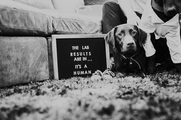"""adorable pregnancy announcement with dogs, """"Lab Results Are In, It's a Human"""", ©Sarah Gillogly Photography"""