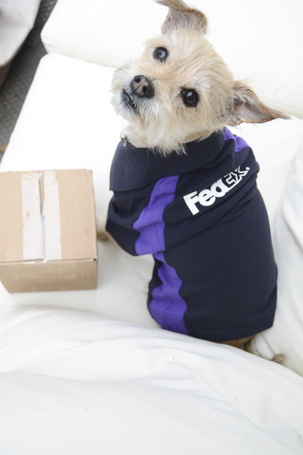 dog wearing FedEx costume, pet portraits