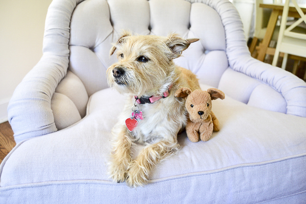 terrier mix sitting on chair with stuffed dog, lifestyle pet portraits