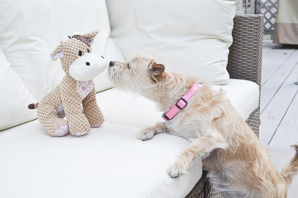Terrier mix sniffing new stuffed dog toy, lifestyle dog photography