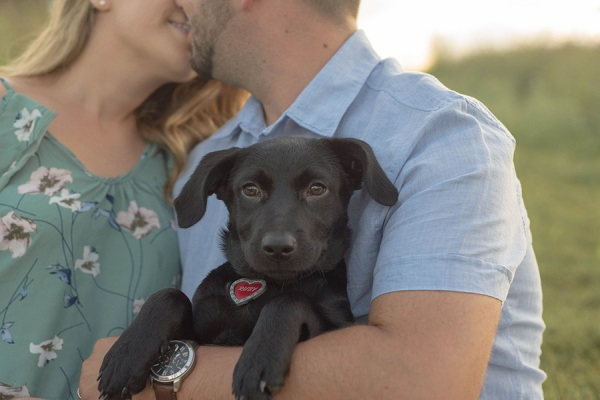 black puppy with red heart shaped tag, on location family-pet portraits