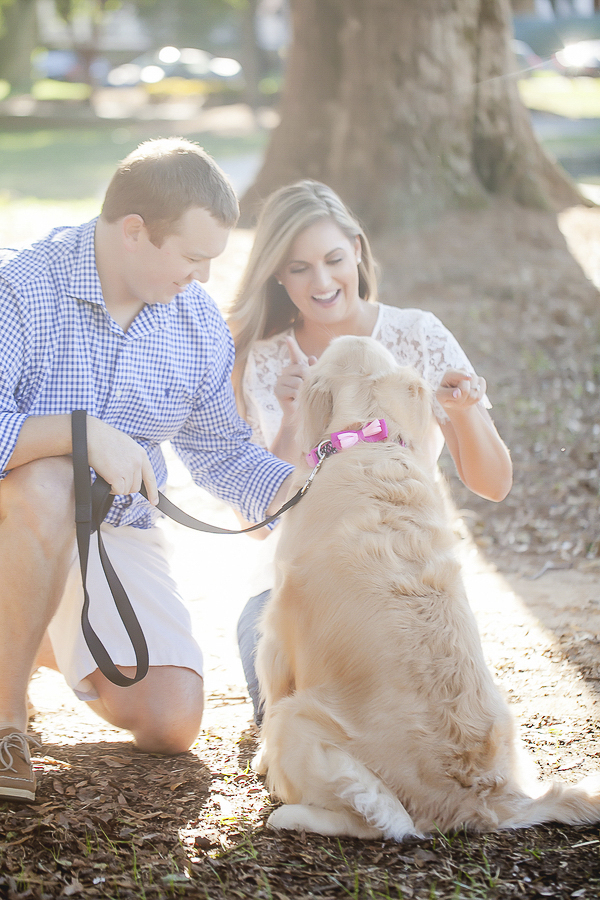 Golden Retriever wearing pink bow collar sitting, engagement photos in park