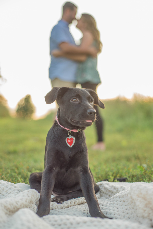newly adopted puppy with people in background, lifestyle pet photography ©Amanda Lane Photography