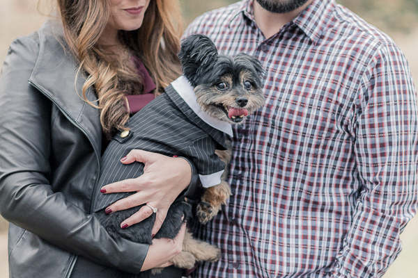 small dog wearing tux for engagement photos, Pom-Yorkie mix (Porky)