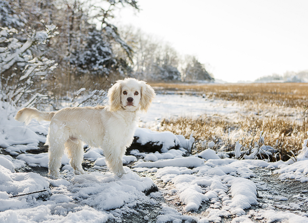 dog field's edge, snowy dog photography