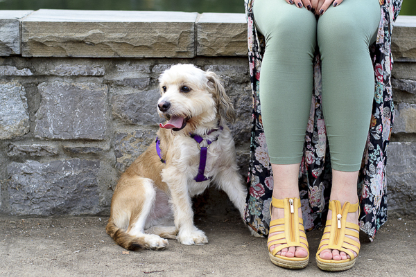 Spaniel/terrier mix next to woman sitting on stone wall, dogs and shoes, stylegoals