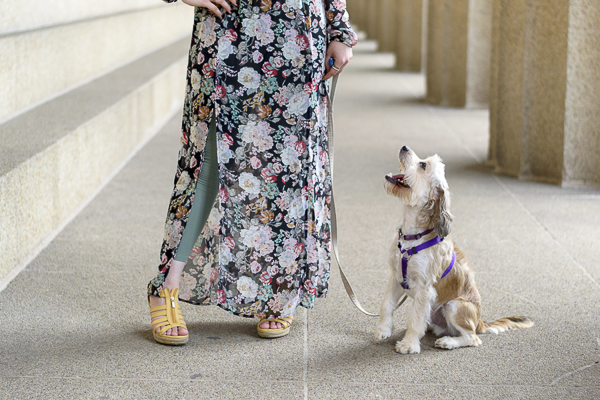 little dog looking up at woman wearing long floral dress, yellow shoes, green leggings, Parthenon