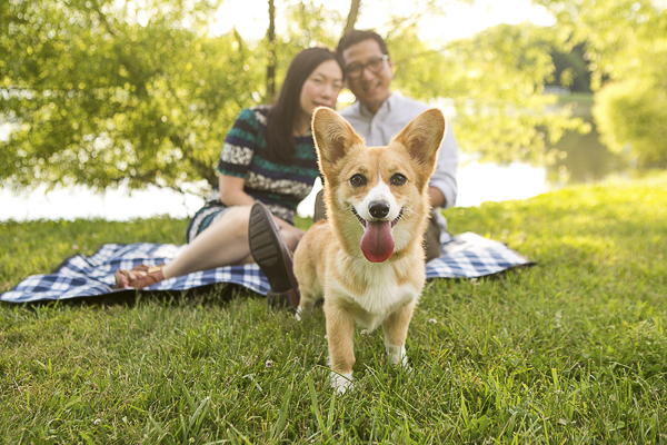 cute Corgi standing in front of her family by river, lifestyle dog photography