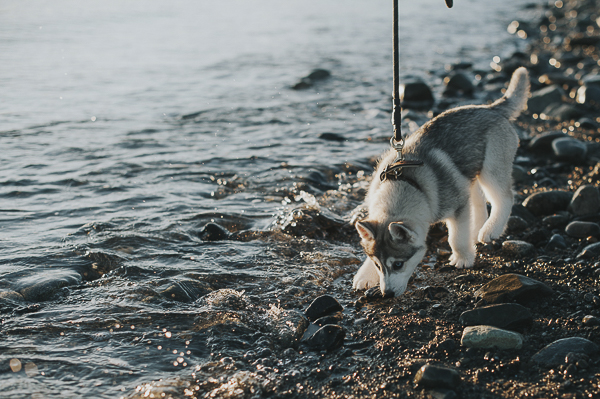 puppy at water's edge, lifestyle dog photography